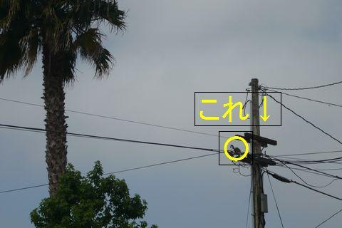b0202185_1644351.jpg
