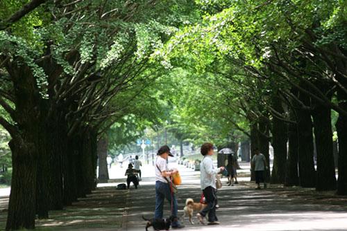 オカトラノオと、散歩道で_f0030085_2041083.jpg