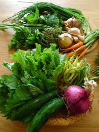 新鮮お野菜_b0142989_22373827.jpg