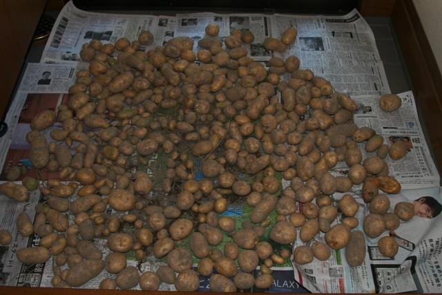 ジャガイモ 掘り_f0229190_14551164.jpg