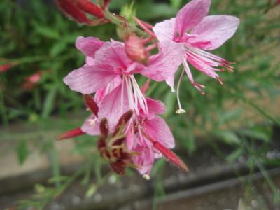 目立たない花ですが_a0207196_21354817.jpg