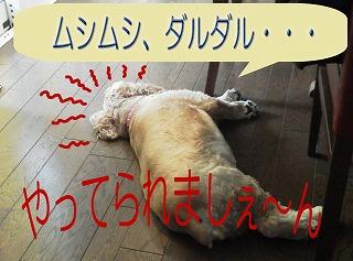 a0135840_1014495.jpg