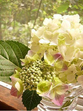 6月のお花_f0206741_2564264.jpg