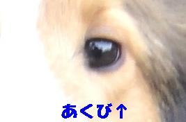 e0195743_530226.jpg