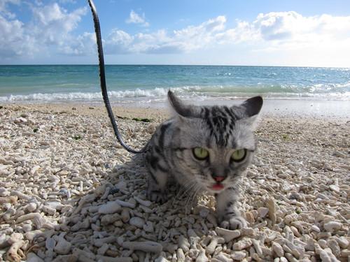 play at the beach._c0153966_17145330.jpg