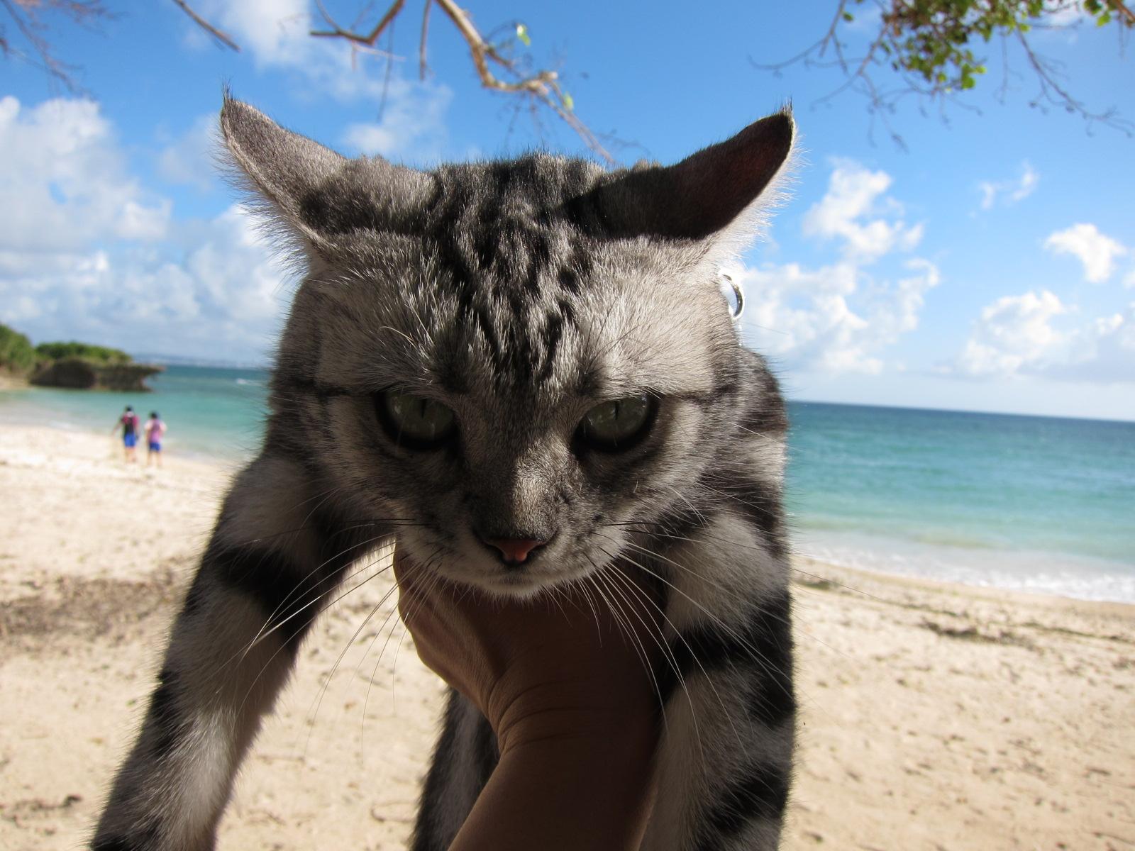 play at the beach._c0153966_17185335.jpg