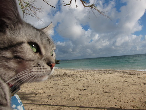 play at the beach._c0153966_17232591.jpg