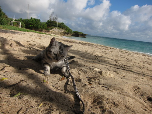 play at the beach._c0153966_1739149.jpg