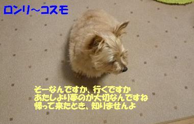 a0154801_9285978.jpg
