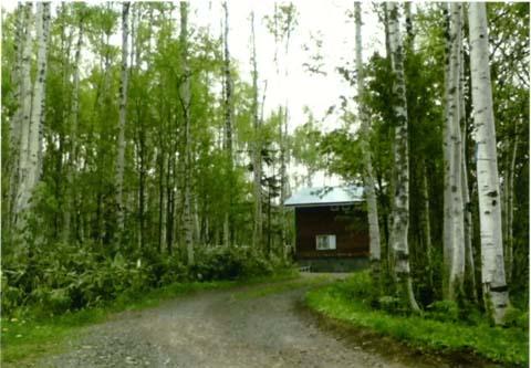 森から森へ_e0059605_23133332.jpg