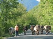 2011年6月28日教室 『スペイン、バスク・ピレネーの旅』 _c0219616_14504528.jpg