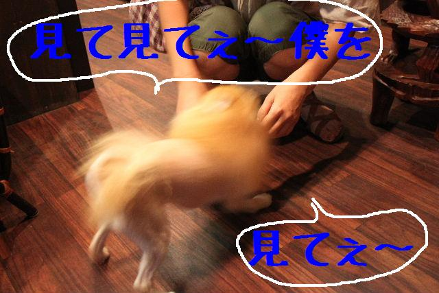 b0130018_845029.jpg