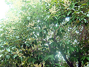 雨の音_d0133128_1534423.jpg