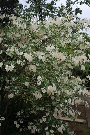 白州花壇&ミヨシペレニアルガーデン_e0110038_2241698.jpg