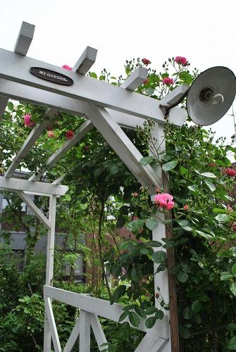 薔薇が咲きました**_e0159050_2315125.jpg
