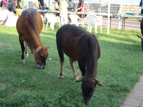 牛の群れに遭遇_e0155771_051227.jpg