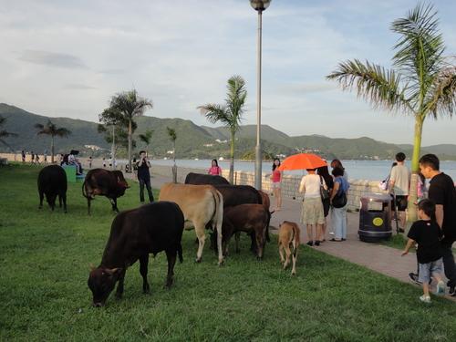 牛の群れに遭遇_e0155771_0515587.jpg