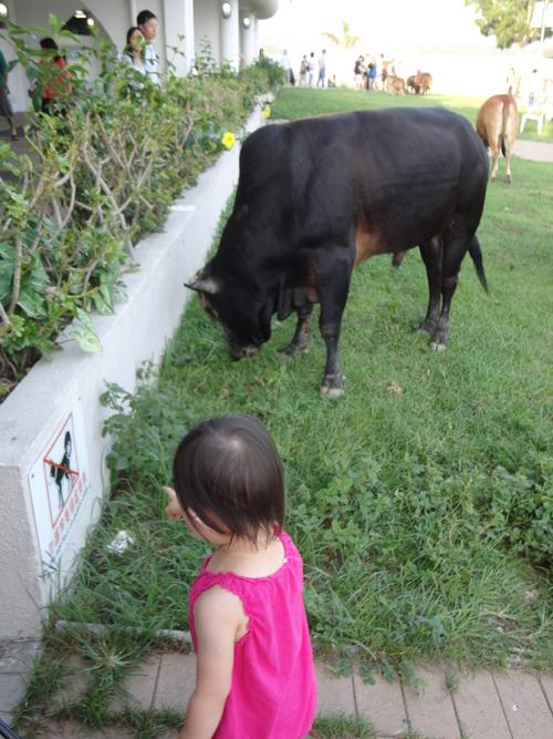 牛の群れに遭遇_e0155771_0534591.jpg