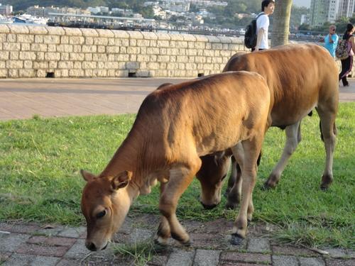 牛の群れに遭遇_e0155771_14271.jpg