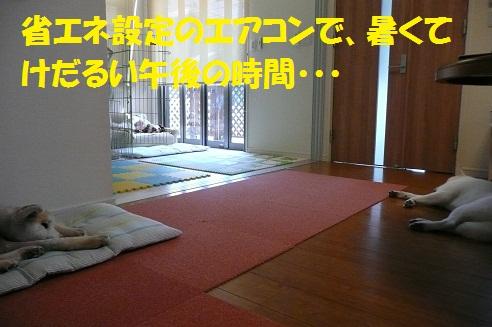 f0121712_6185737.jpg