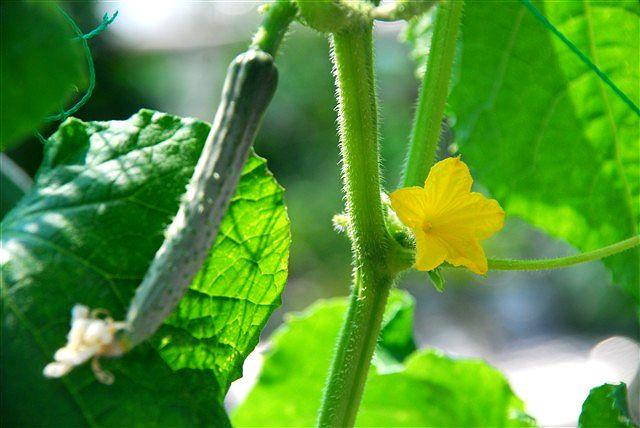 「収穫」_c0116714_11414683.jpg