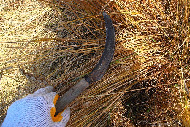 「収穫」_c0116714_1144345.jpg