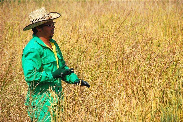 「収穫」_c0116714_1147544.jpg