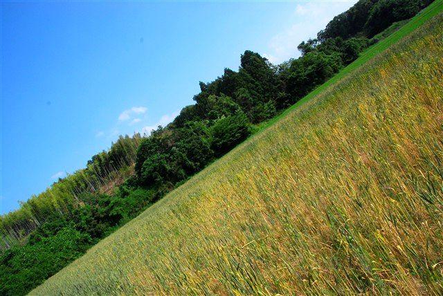 「収穫」_c0116714_11502344.jpg