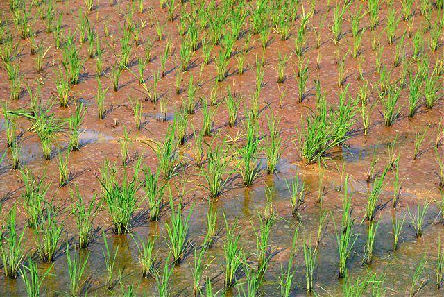 「収穫」_c0116714_11504412.jpg