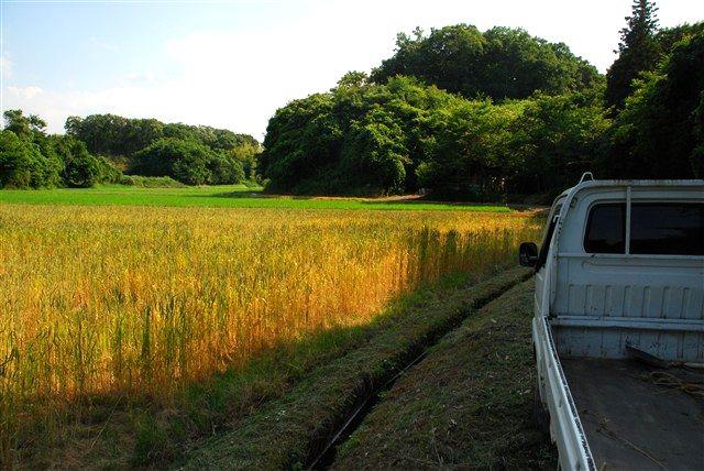 「収穫」_c0116714_1151472.jpg