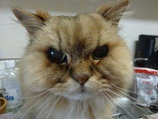 猫のお友だち こてつくんostaraちゃん編。_a0143140_22442994.jpg