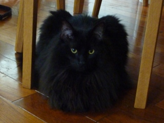猫のお友だち こてつくんostaraちゃん編。_a0143140_22462929.jpg