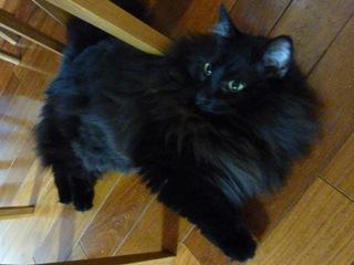 猫のお友だち こてつくんostaraちゃん編。_a0143140_22515447.jpg