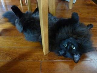 猫のお友だち こてつくんostaraちゃん編。_a0143140_22521740.jpg