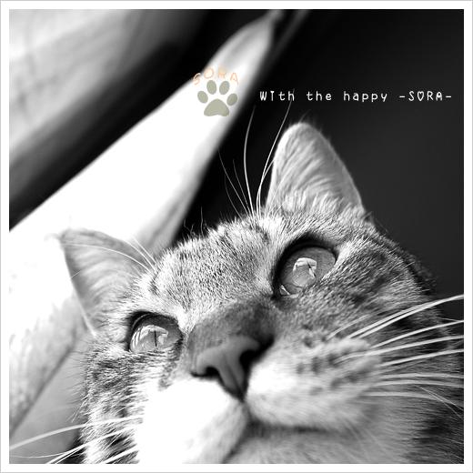 happy SORA お知らせ _b0049843_22285915.jpg