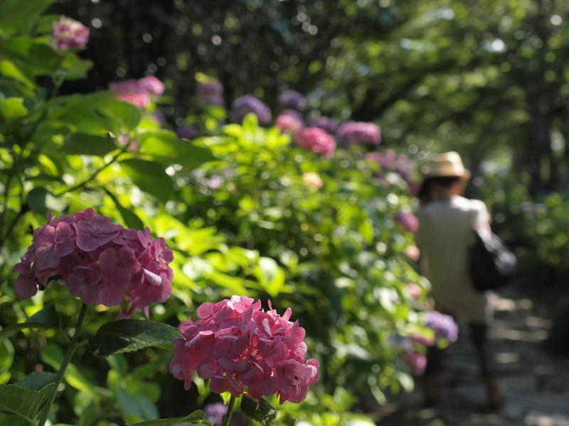 リベンジ紫陽花w_f0209144_461684.jpg