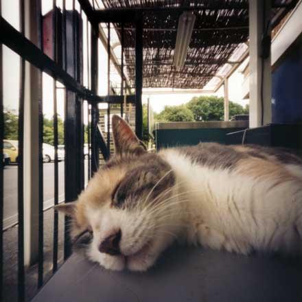 青梅鉄道公園の猫の園長 のら 東京都青梅市 Pinhole Photography_f0117059_18315458.jpg