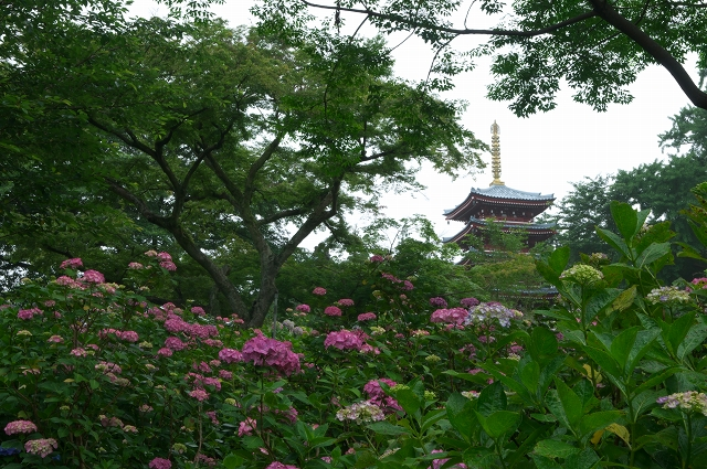 梅雨の本土寺 2011_f0018464_71059.jpg