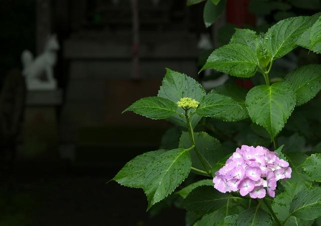 梅雨の本土寺 2011_f0018464_711497.jpg