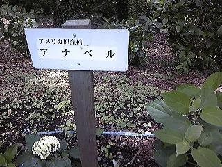紫陽花図鑑 2011_c0189469_22374919.jpg