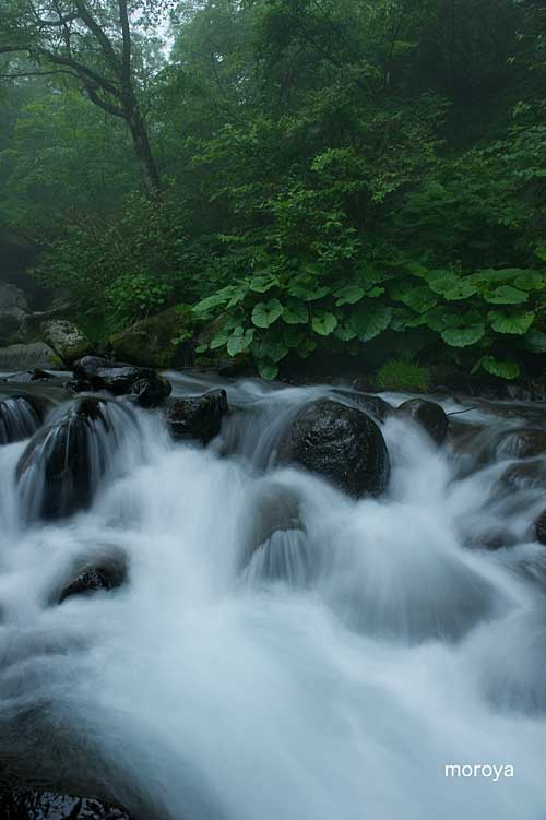 霧の渓谷_c0085877_7182530.jpg