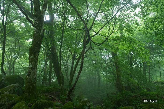 霧の渓谷_c0085877_7184515.jpg