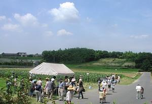トウモロコシ収穫体験です!_d0120421_1829042.jpg