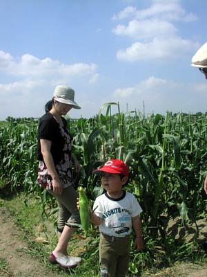 トウモロコシ収穫体験です!_d0120421_18291919.jpg
