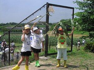 トウモロコシ収穫体験です!_d0120421_18335494.jpg