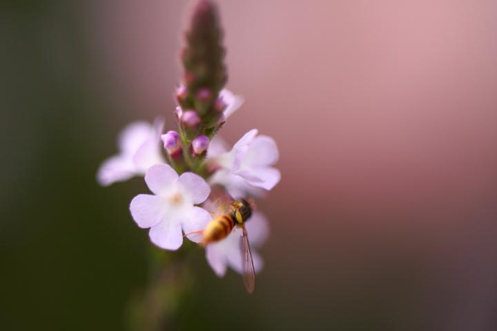 初夏の花2_e0169421_21372176.jpg