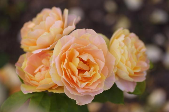 初夏の花2_e0169421_21375766.jpg