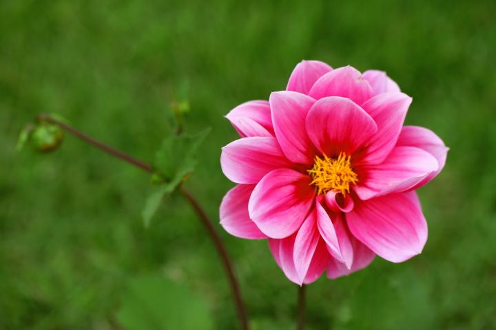 初夏の花2_e0169421_21381086.jpg