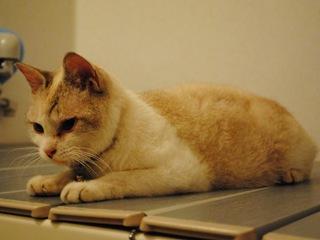 迷子猫のお友だち ダヤン首輪くん編。_a0143140_2294977.jpg