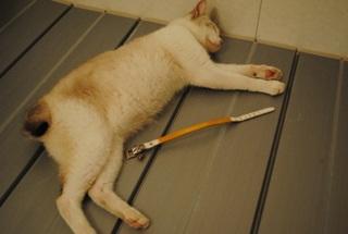 迷子猫のお友だち ダヤン首輪くん編。_a0143140_2295769.jpg